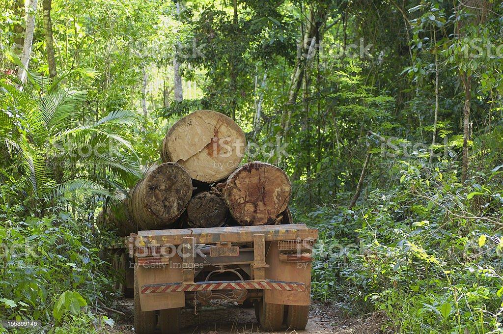 O desmatamento na floresta Amazônica - foto de acervo