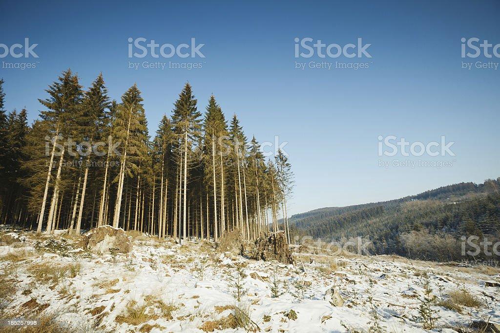 Déforestation le belge Ardenne - Photo