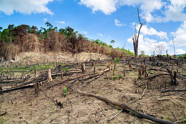Deforestation in the Philippines Deforestation in El Nido, Palawan - Philippines. deforestation stock pictures, royalty-free photos & images