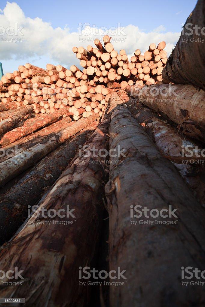 Deforestation: lumber yard stock photo