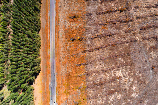 Deforestation. Aerial view of timber industry in New Zealand. deforestation stock pictures, royalty-free photos & images