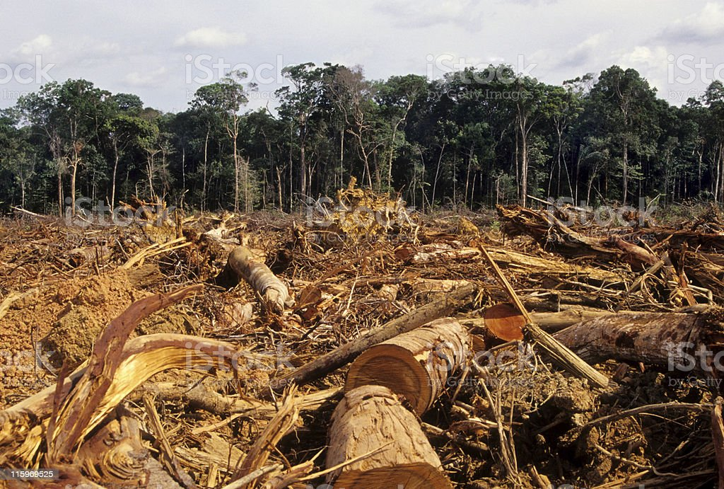 Deforestation Normal scene in the Amazon Accidents and Disasters Stock Photo