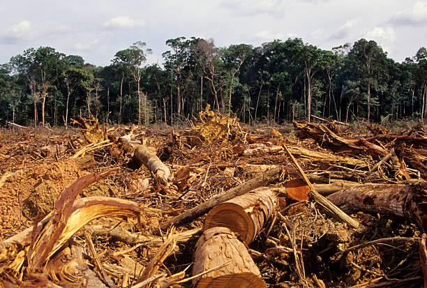 Deforestation Normal scene in the Amazon fallen tree stock pictures, royalty-free photos & images