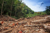 Logging. Rain forest cut down in Borneo Island, Indonesia. Environmental conservation issue