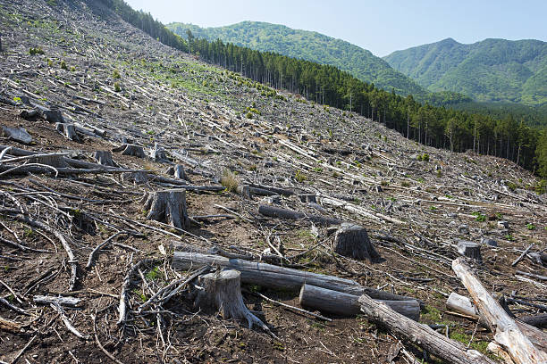 Deforestation Deforestation by forest felling in Japan environmental damage stock pictures, royalty-free photos & images