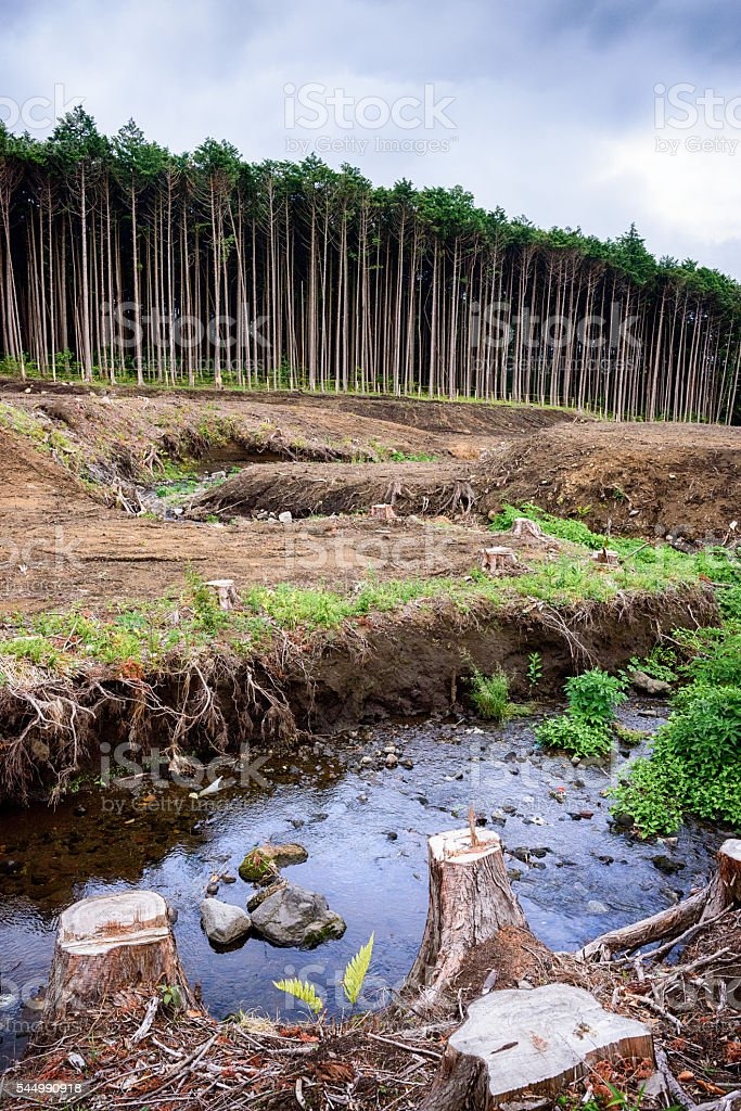 Deforestation stock photo