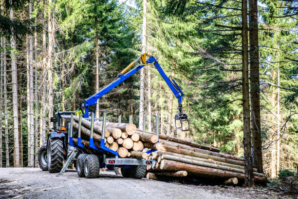 deforestation - logging equipment stock photos and pictures