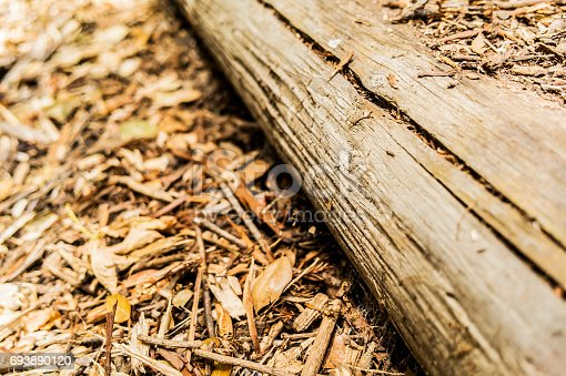 Wood Log on mulch with copy space.