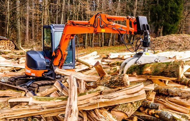산림 벌채 - 목재 공업 뉴스 사진 이미지
