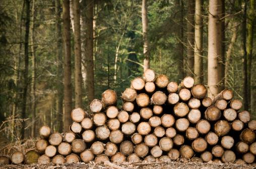 Deforestation. Freshly chopped tree trunks. Copyspace upper left corner.