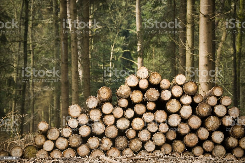 Deforestation tree trunks stock photo