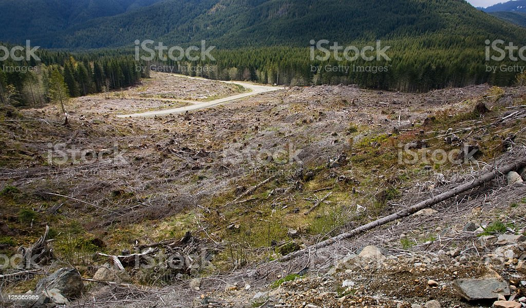 Deforestation - Vancouver Island, British Columbia royalty-free stock photo