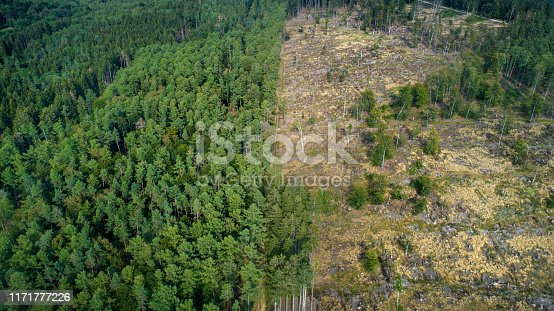 Deforested area, forest dieback, Taunus mountains, Germany
