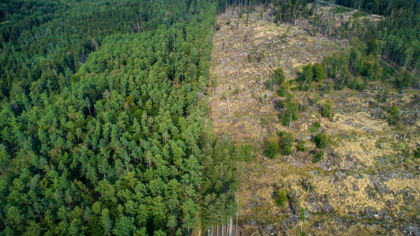 Deforested area, Taunus mountains, Germany Deforested area, forest dieback, Taunus mountains, Germany deforestation stock pictures, royalty-free photos & images