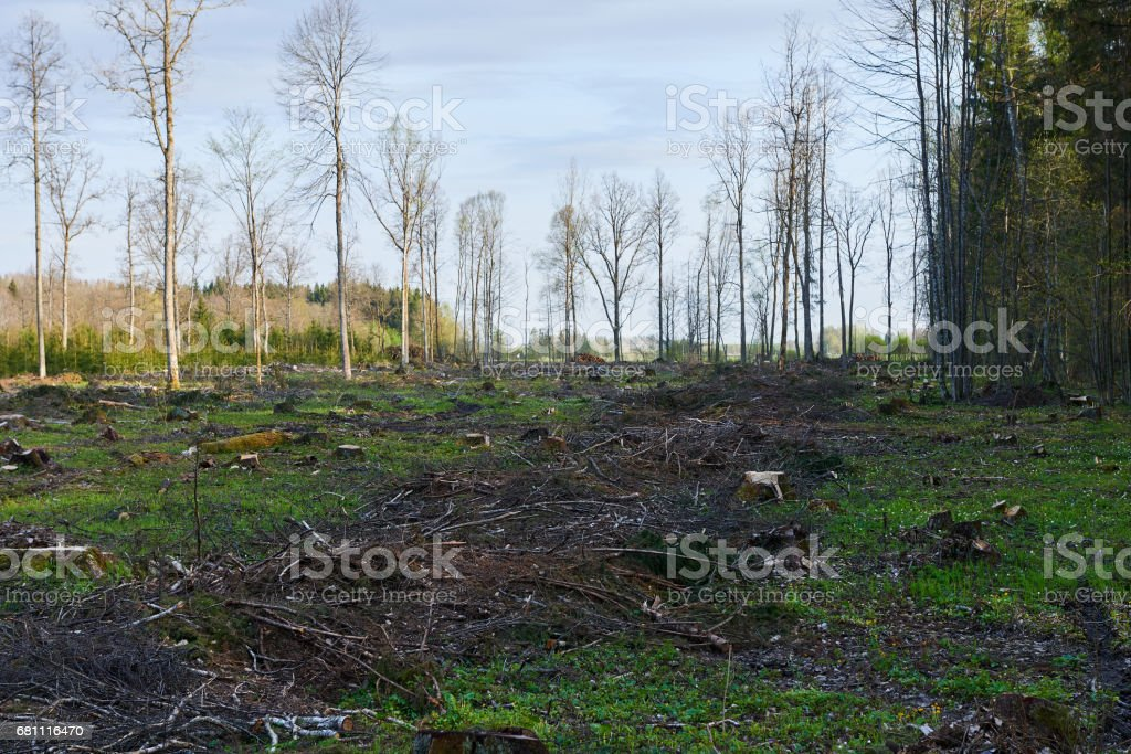 Deforested Lithuania royalty-free stock photo