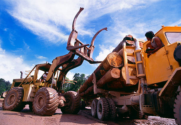 deforestration - logging equipment stock photos and pictures