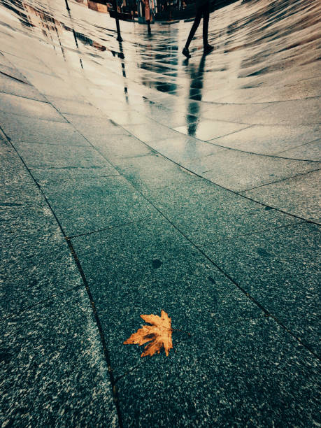 Deformed view of a yellow leaf in the street