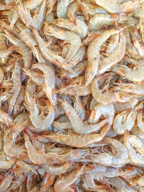 defrost prawn on ice - defrost stock pictures, royalty-free photos & images