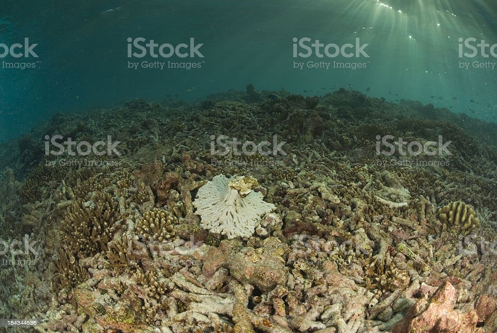degraded coral reef stock photo