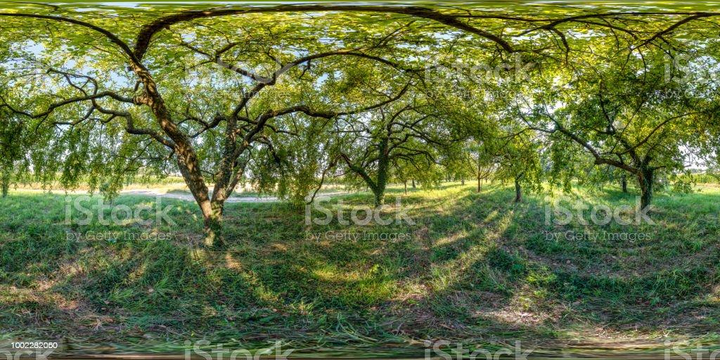 360-Grad-Bereich Landschaft Apfelbaum – Foto