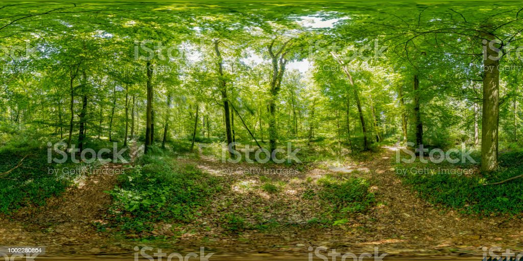 360-Grad-Bereich Landschaft Wald – Foto