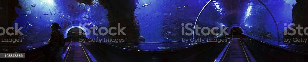 360 degree Underwater Tunnel Panorama stock photo