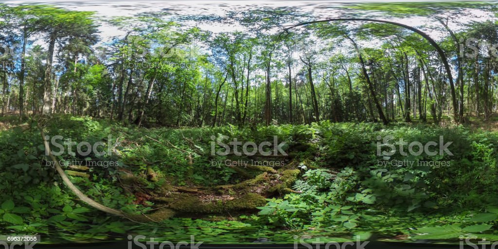 360 degrees spherical panorama of a beautiful european forest in the summer with blue sky stock photo