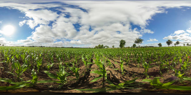 Degrees spherical panorama of a field with young corn plants under picture id700247950?b=1&k=6&m=700247950&s=612x612&w=0&h=i xpxjtx5tm8trqgzoyf6rx48bnw8wumo8wgncchi44=
