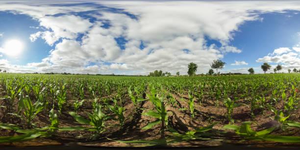 360 Grad sphärischen Panorama eines Feldes mit jungen Maispflanzen unter Sunnie blauen Himmel in Deutschland – Foto