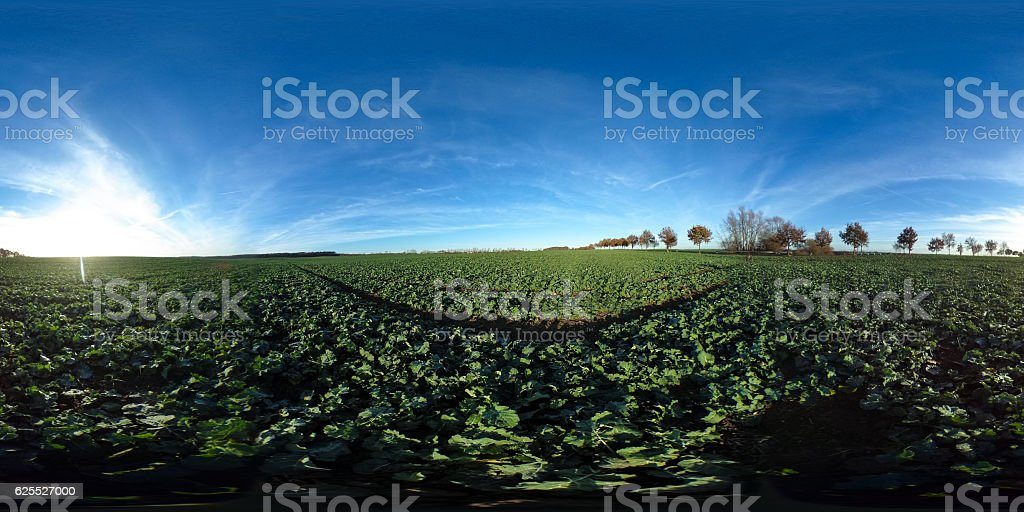 360 degrees spherical panorama of Agricultural fields with green plants stock photo