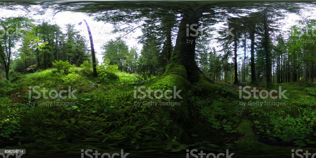 360 degrees spherical panorama of Norwegian forest in Bergen stock photo