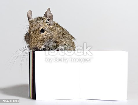 istock degu pet with blank poster in paws 534742683