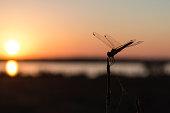 End of summer nature in Dehesa de Abajo