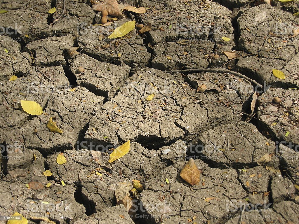 Dehydrated, cracked earth with dead leaves  stock photo