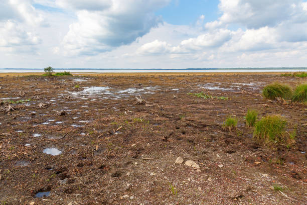 Dehydrated lake in summer Dehydrated lake in summer lake bed stock pictures, royalty-free photos & images