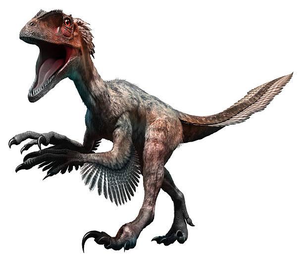 deinonychus - dinosaurier illustration stock-fotos und bilder