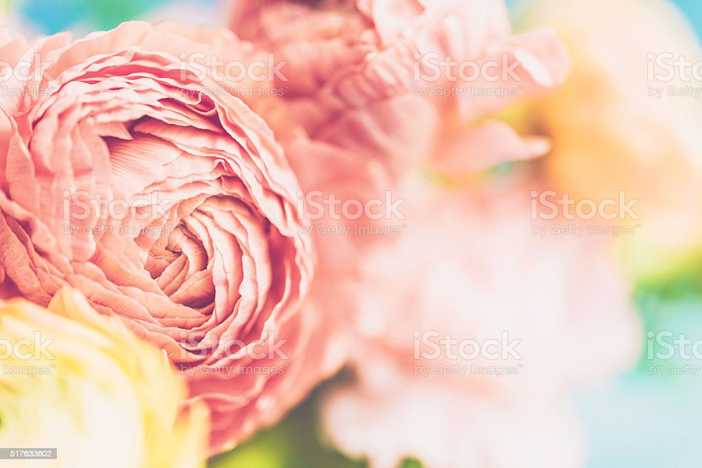 Delicate and beautiful ranunculus and carnation bouquet for Mother's Day stock photo
