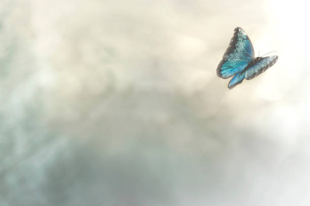 delicate butterfly flies free in the sky stock photo