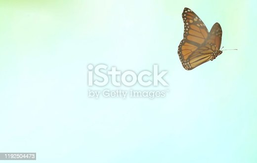 Delicate butterfly flies free stock photo