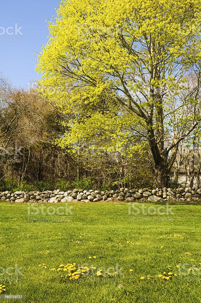 Delicate Colors of Spring royalty-free stock photo