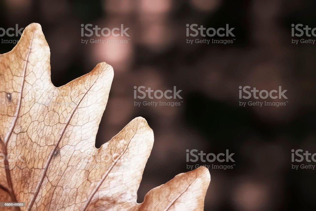 Délicate feuille sèche de fougère panier avec fond Bokeh. photo libre de droits