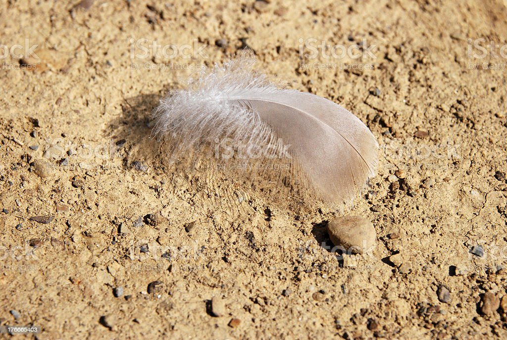 Delicate feather on stony, hard ground royalty-free stock photo