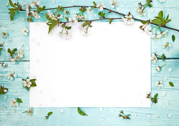 delicate frame with flowers of cherry - sakura background stock photos and pictures