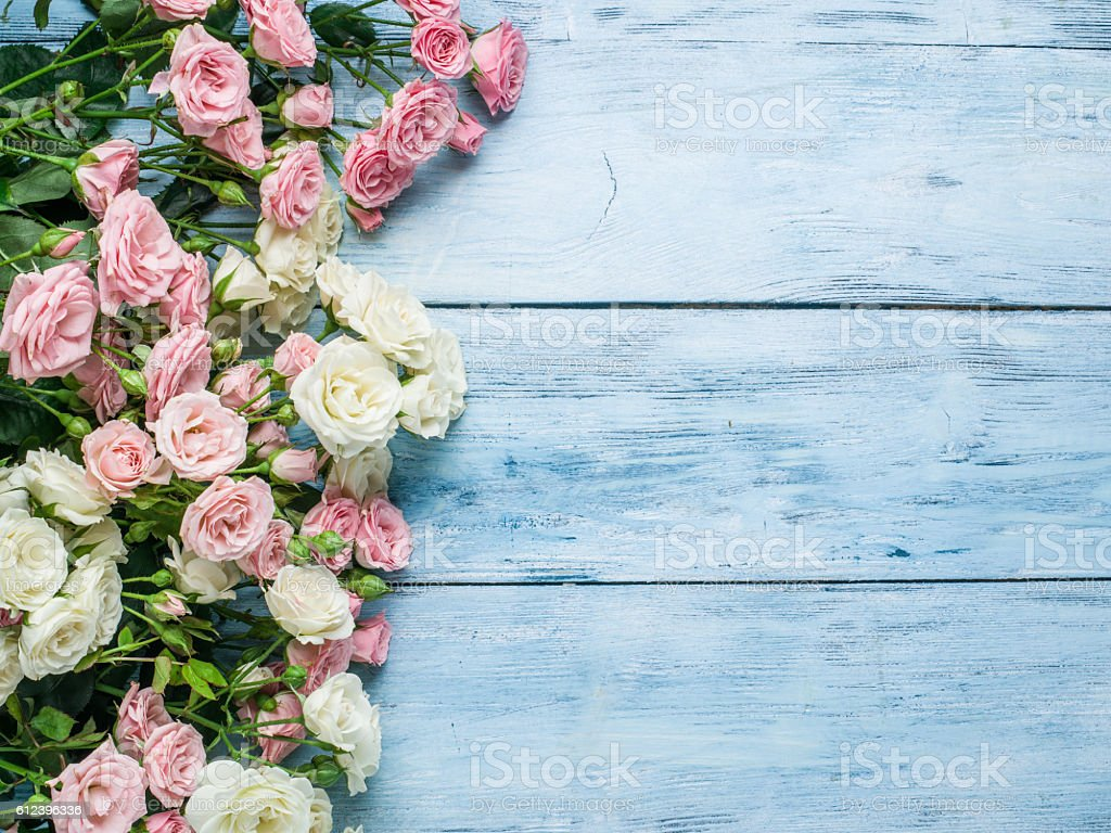 Delicate fresh roses on the blue wooden background. ストックフォト