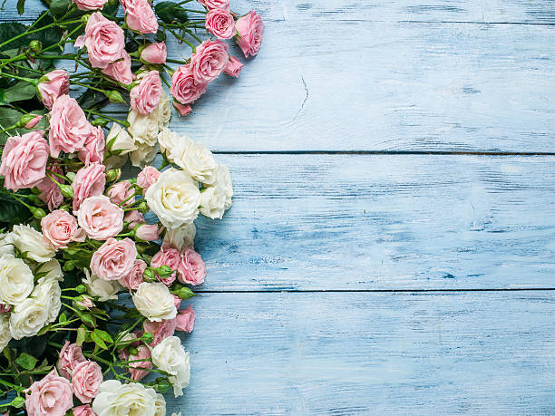 Delicate fresh roses on the blue wooden background. stock photo