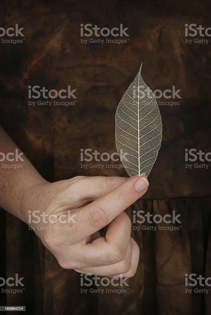 Delicate Nature stock photo