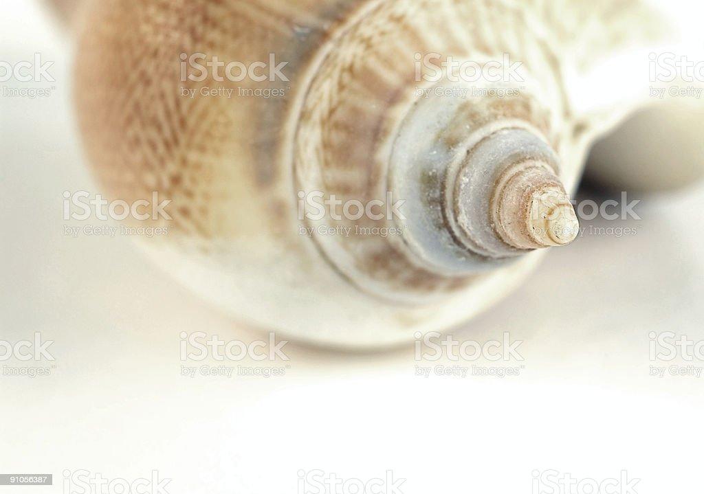 Delicate seashell royalty-free stock photo