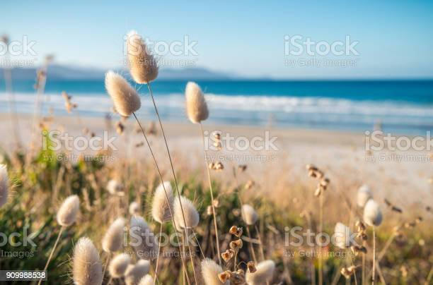 Photo of Delicate soft grass growth in sand dunes on idyllic New Zealand beach