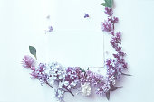 istock delicate spring flowers on white background. Flat lay, top view 1047550310