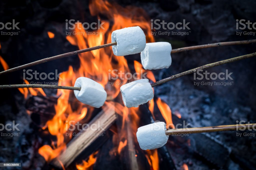 Delicious and sweet marshmallows on stick over the bonfire stock photo